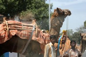 camel ride, anyone?